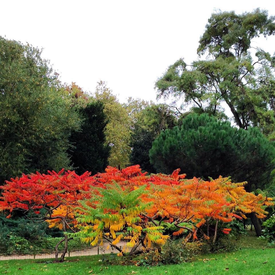 Faris fall trees.jpg