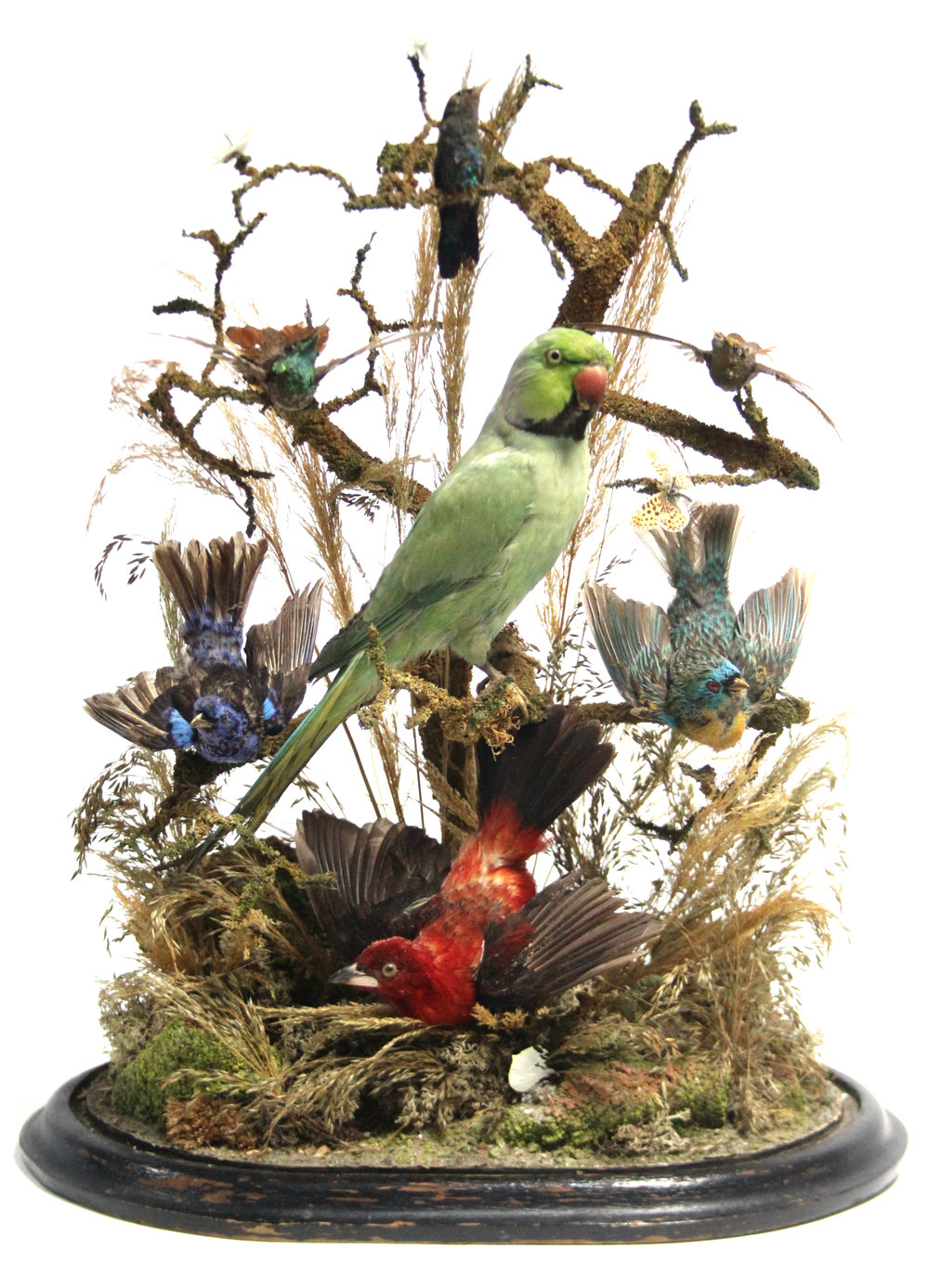 Sold For £500 A late 19thC Taxidermist's display
