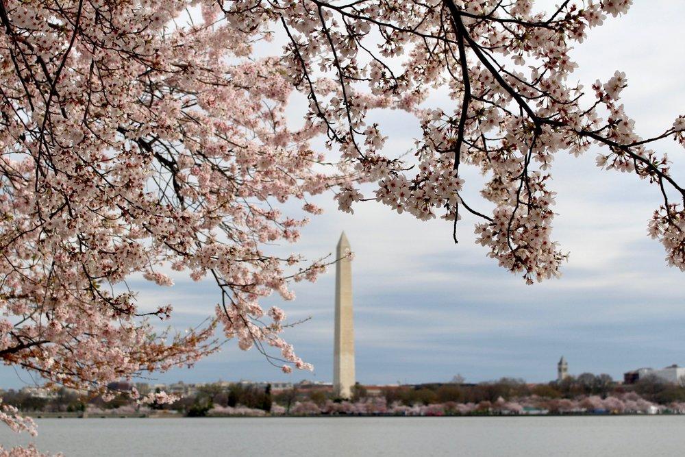 CHERRY BLOSSOM FESTIVAL / WASHINGTON DC / 2017