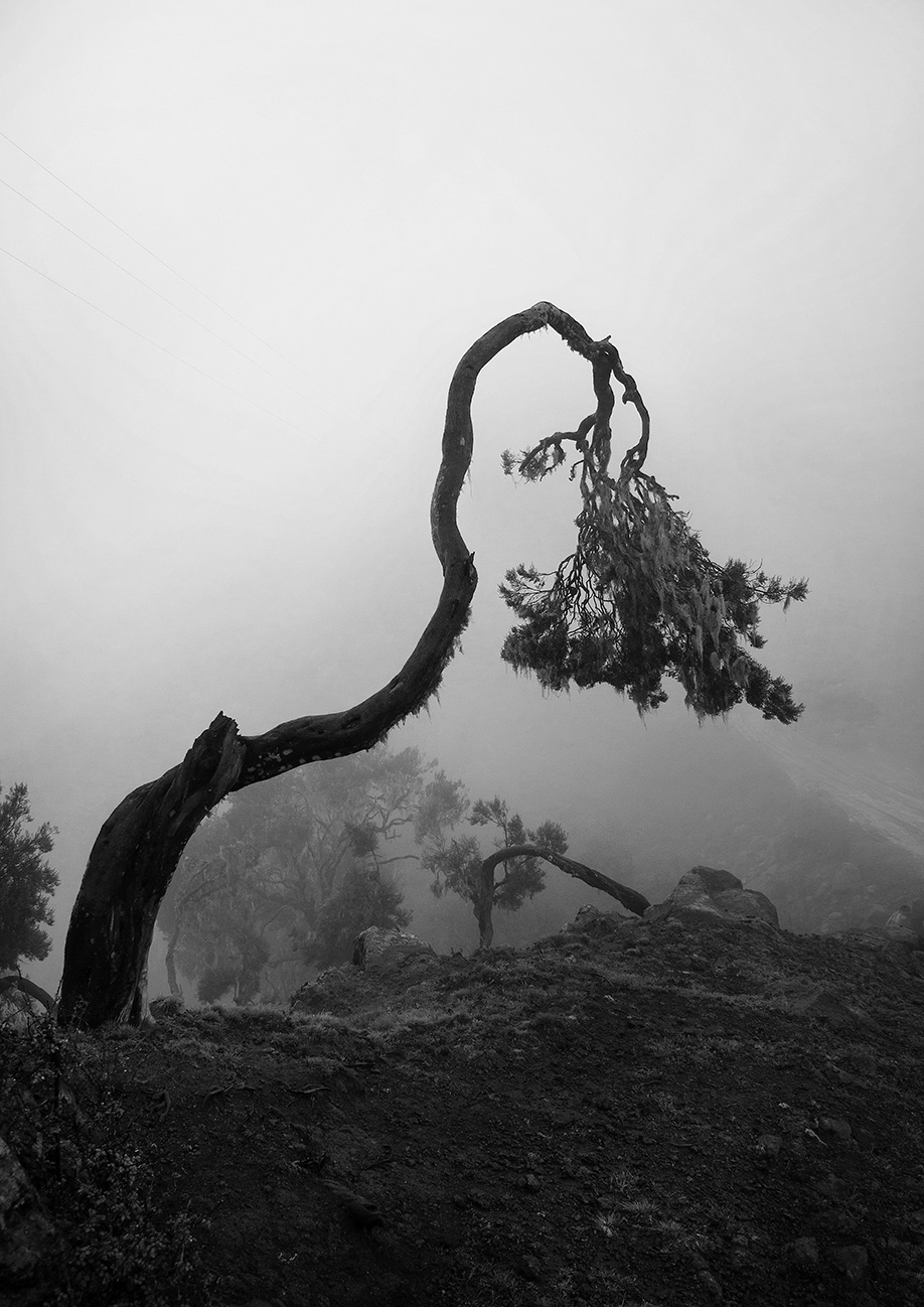 The Giving Tree, Simien Mountains, Ethiopia 2013 | Leaves of Grass