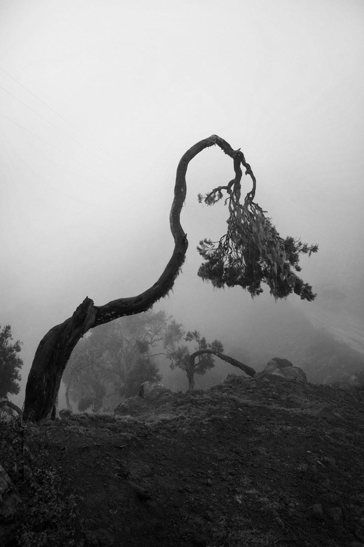 Leaves of Grass   Euphorisch ging ich fort, ohne zu wissen wohin und kehrte leise zurück mit nichts als Bildern. Äthiopien.