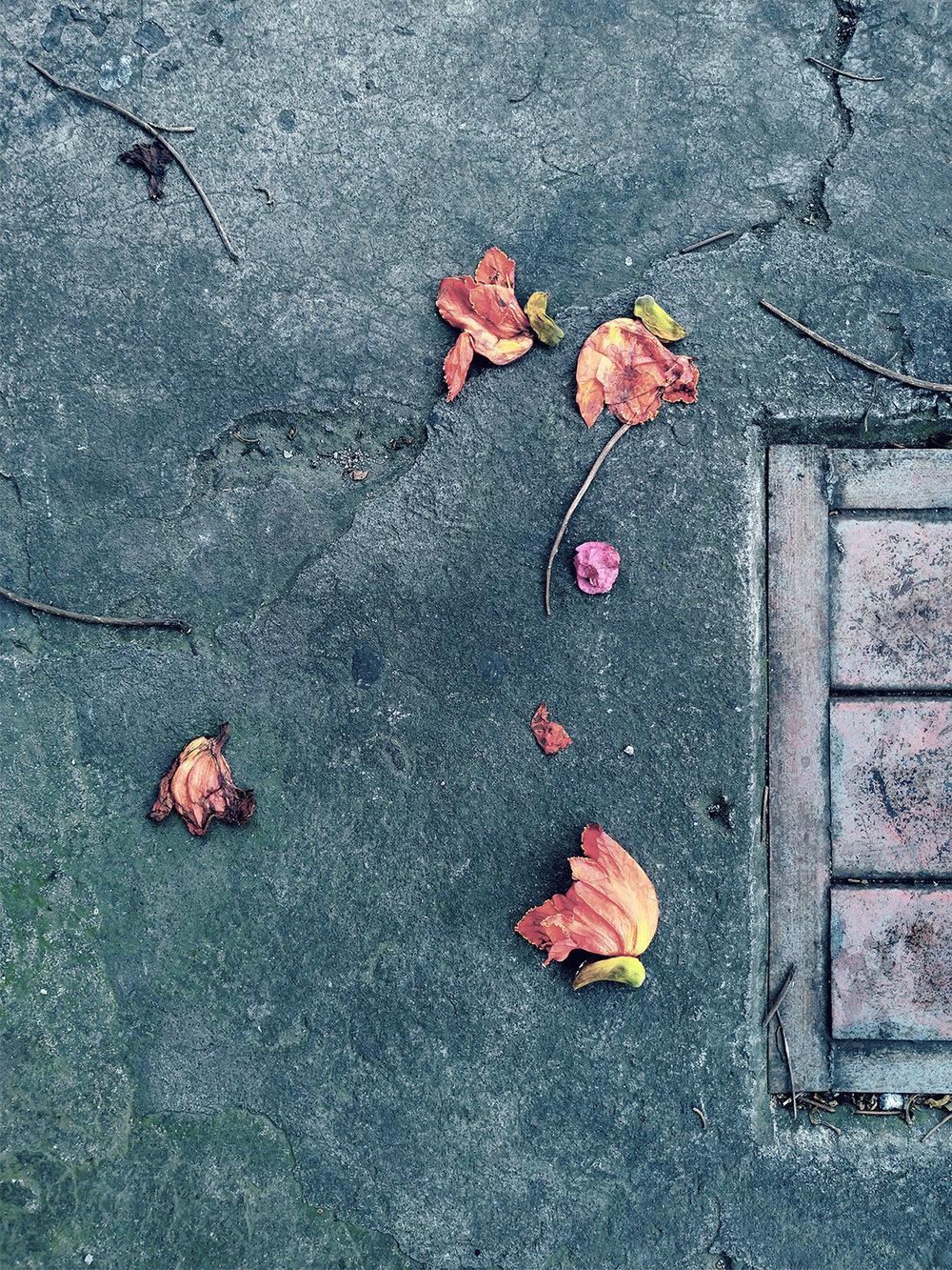 FallenLeaves-SanJose-s.jpg