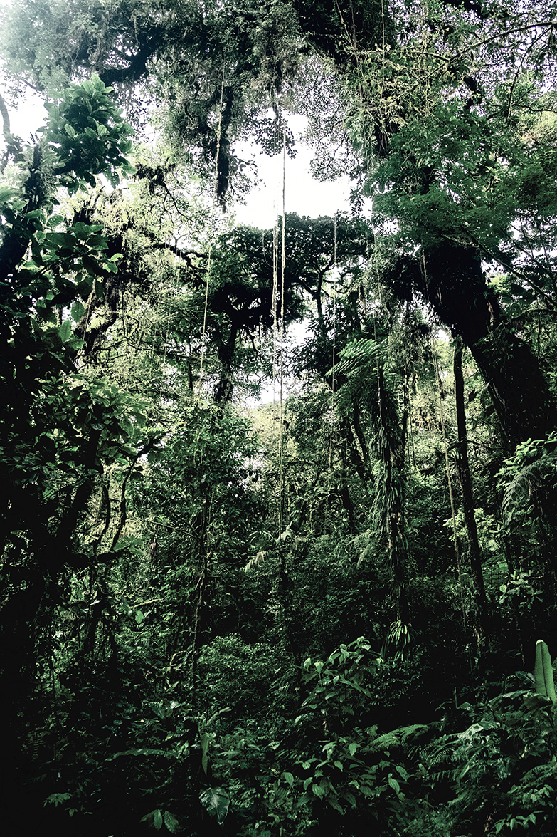 DomFl-Monteverde-SantaElenaReserve-07.jpg