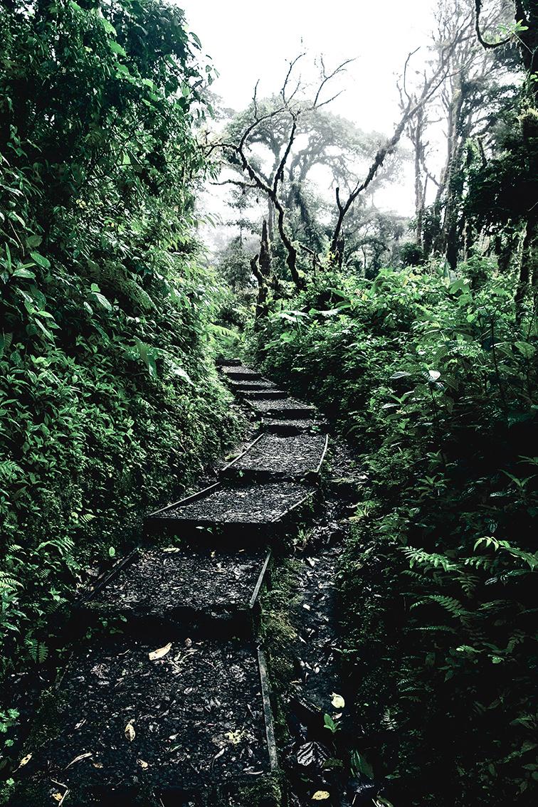 DomFl-Monteverde-SantaElenaReserve-02.jpg
