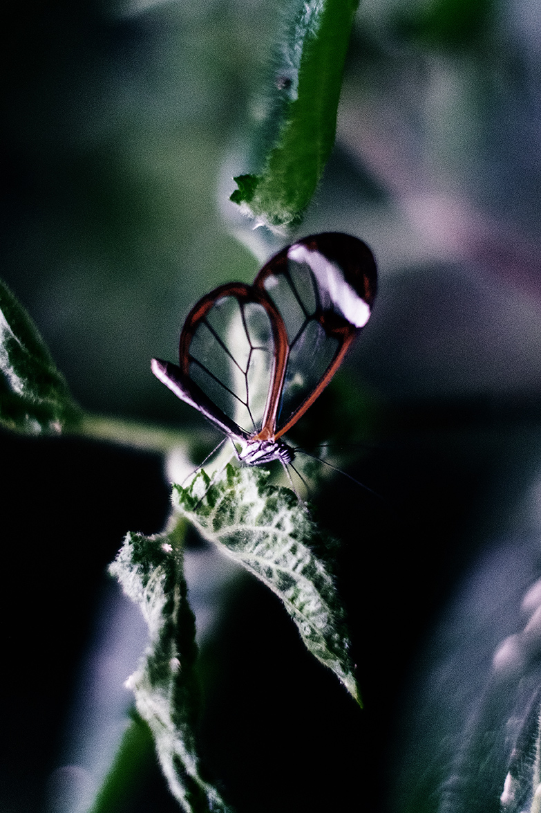 Buterflies002.jpg