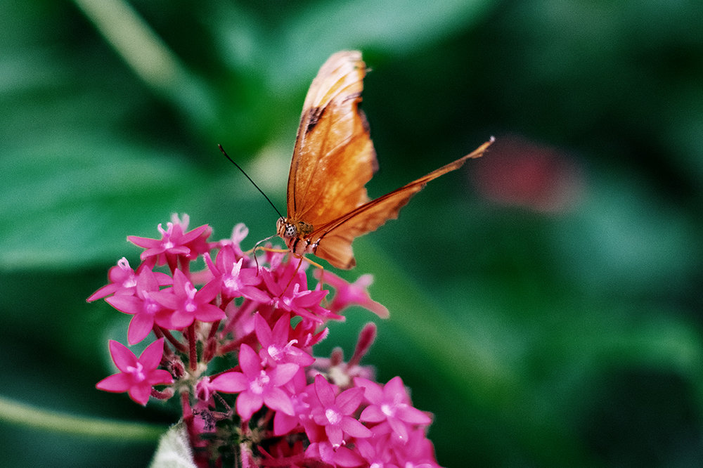 DomFleischmann-ButterflyGarden-02.jpg
