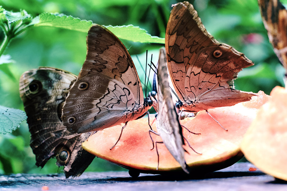 Buterflies005.jpg