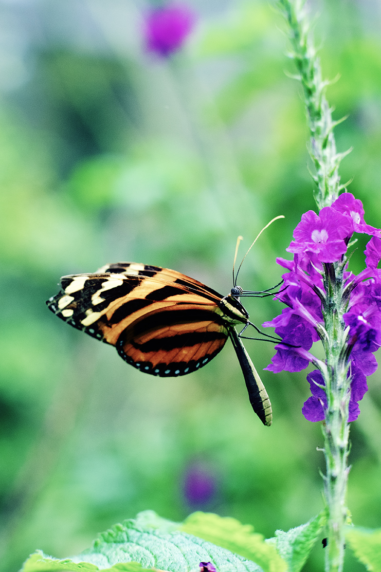 Buterflies007.jpg