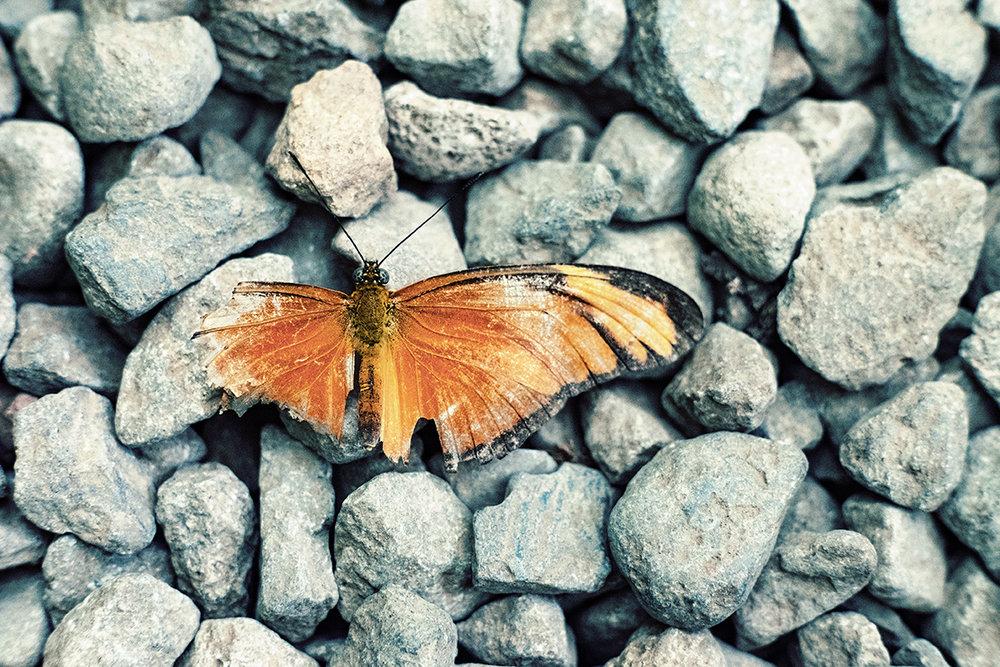 DomFleischmann-ButterflyGarden-01.jpg