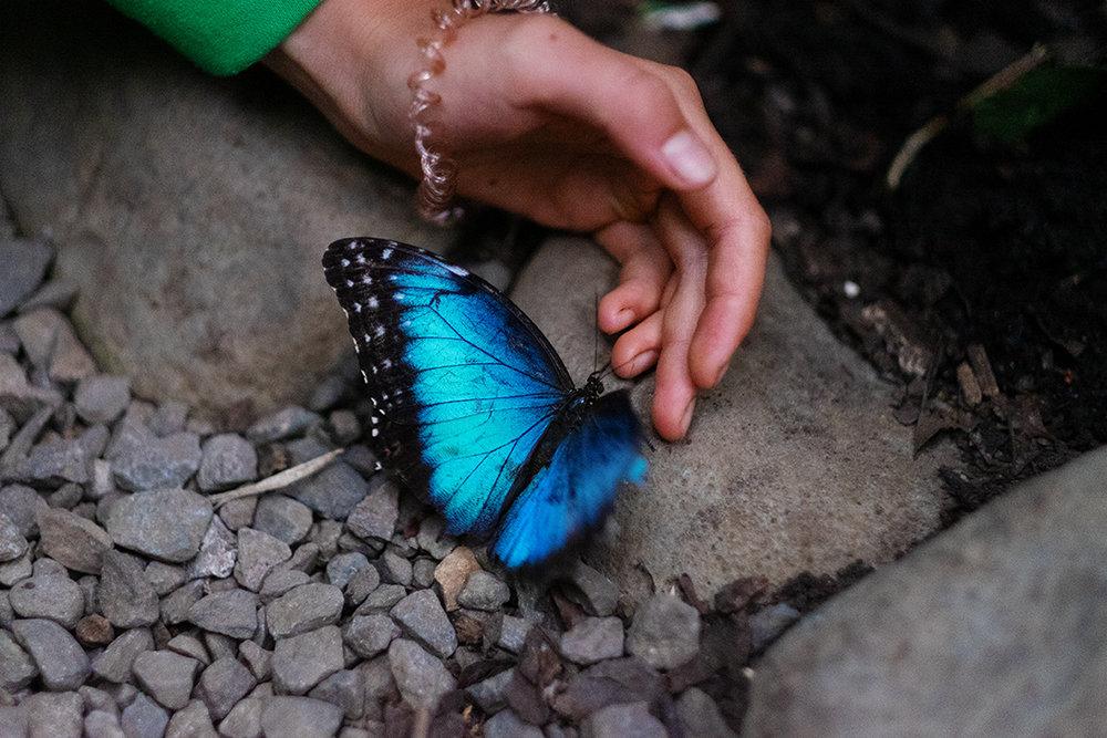 Buterflies026.jpg