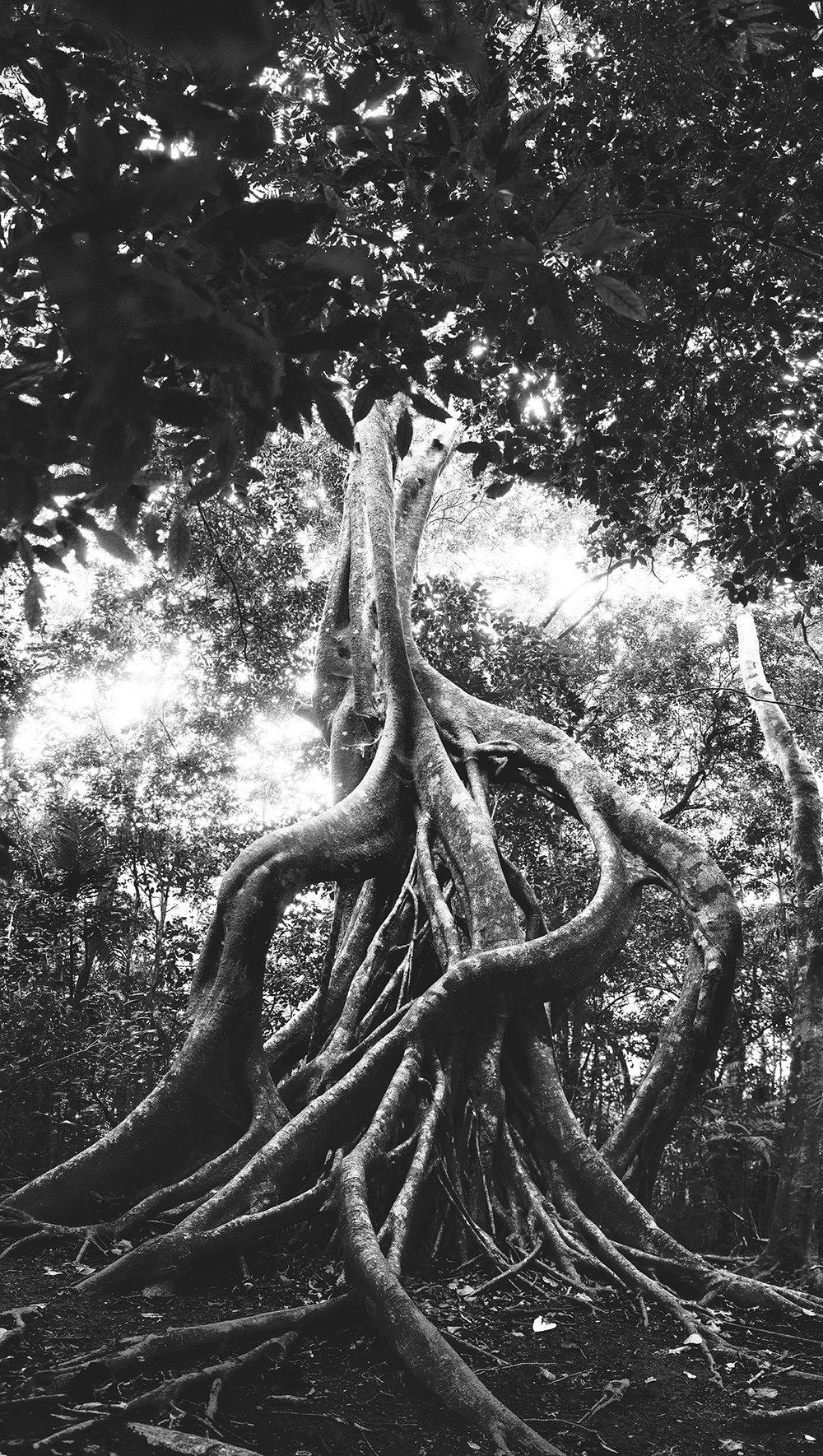 DomFl-Monteverde-ValleEscondid0-47-2.jpg
