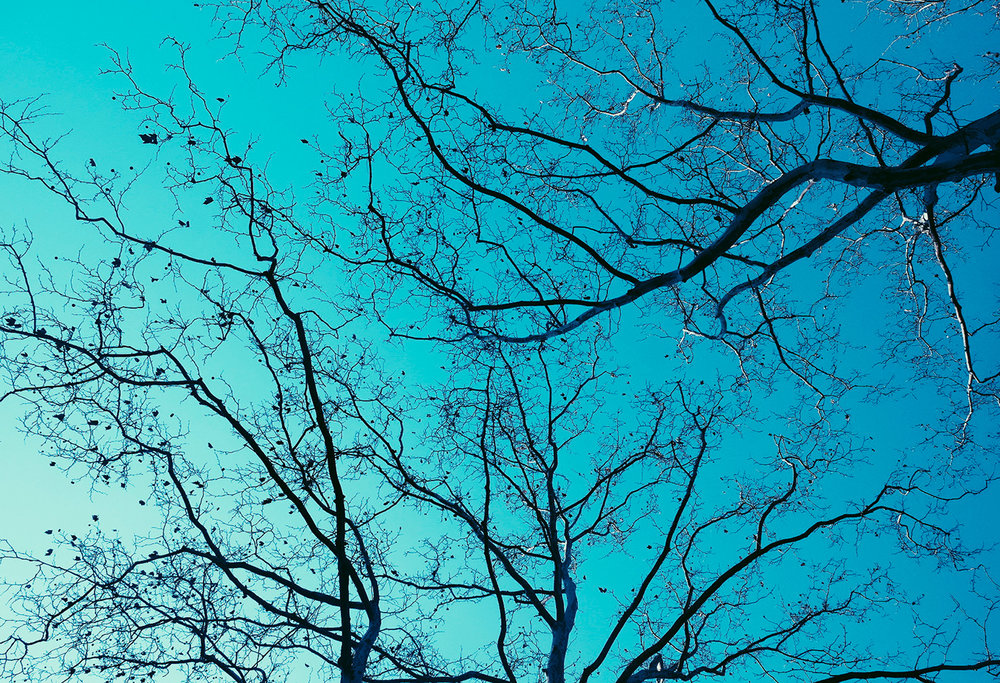 NYC-Dom_Fleischmann340.jpg