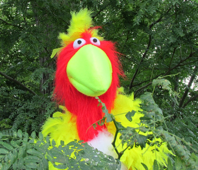 Pablo the Parrot