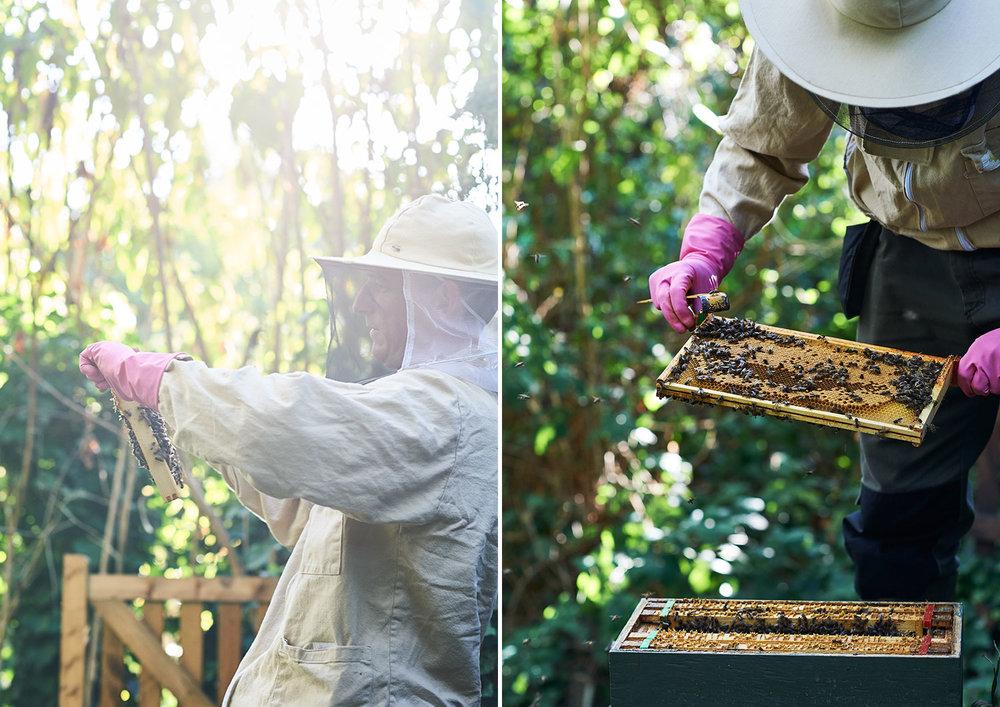 ben-with-bees.jpg