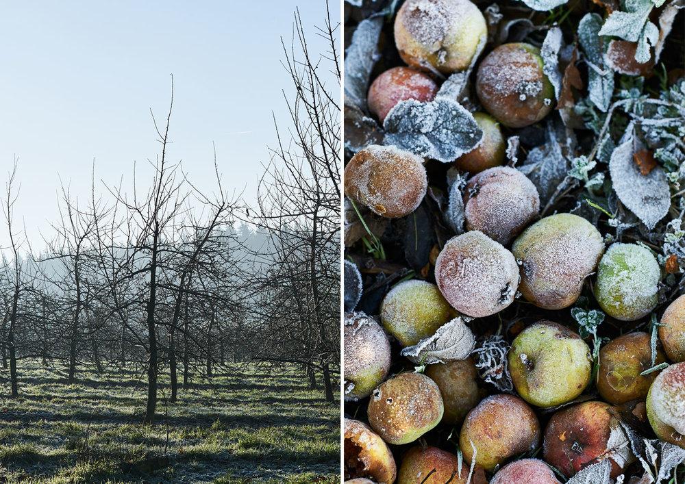 Orchard-apples-1.jpg