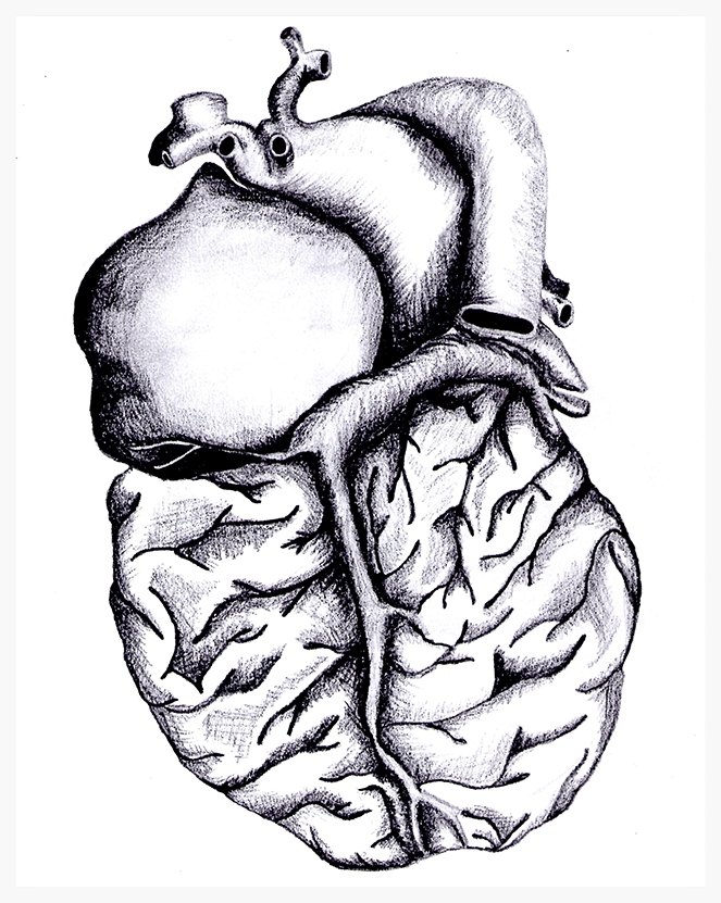 HeartBrain , 2013.Graphite on paper (8.5x11).