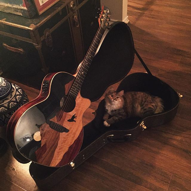 Chillin like a villain 🐱 #catsitting (Her name is Natasha, and the guitar is a Luna Vista Wolf)
