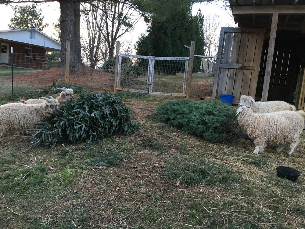 Christmas Tree Treats!