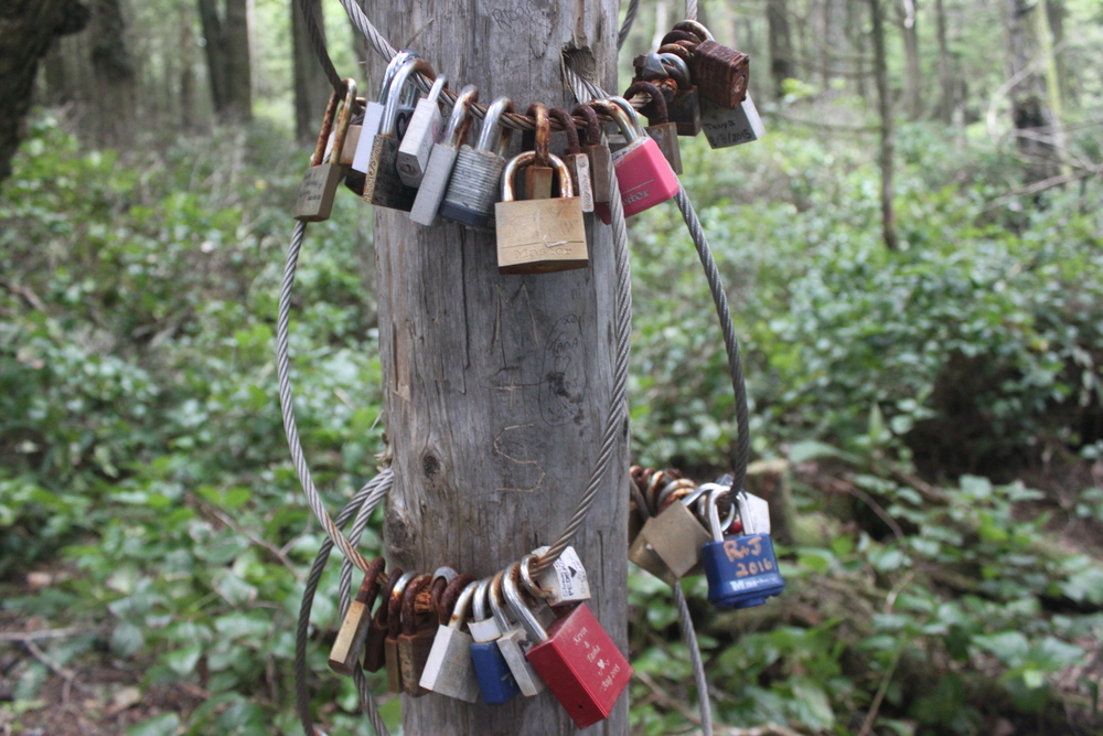 Locks of Love on the Wild Pacific Trail