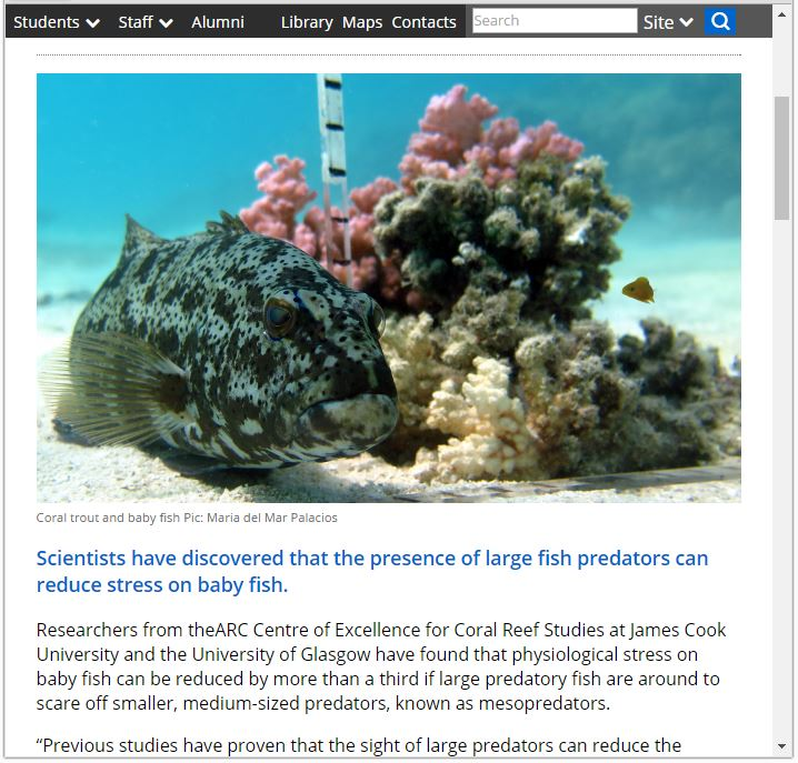 Press release : Baby fish breathe easier around large predators (2016)- James Cook University, AU