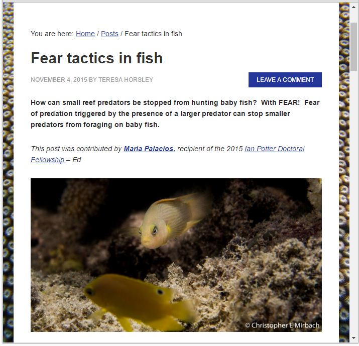 Blog post:  Fear tactics in fish  (2015) – Lizard Island Reef Research Foundation