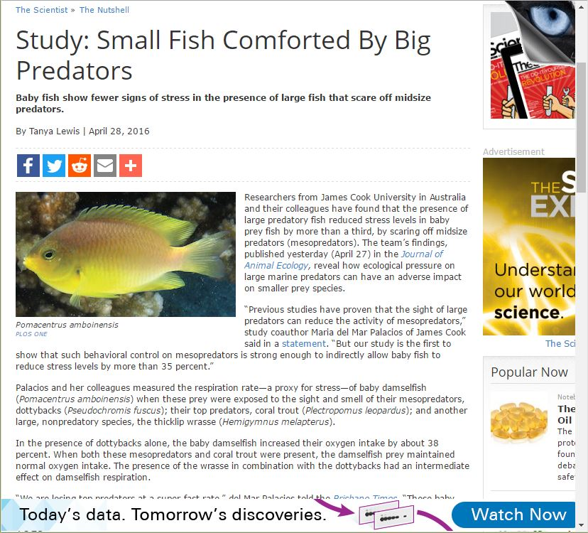 Study: Small fish comforted by big predators (2016)  - TheScientist.com