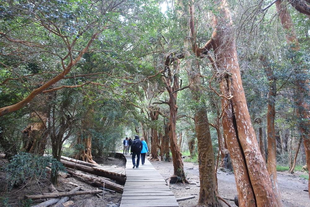 Arrayan Forest