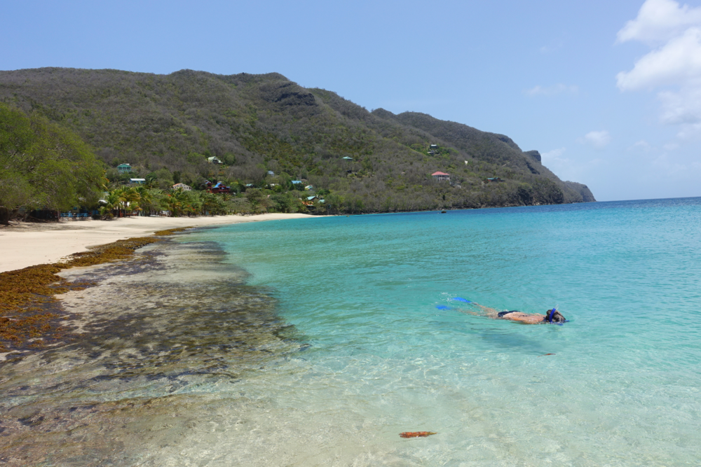 snorkelling at lower bay beach