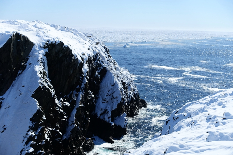 cliffs and sea ice - bonavista peninsula