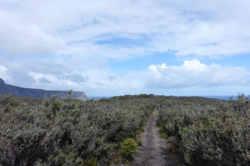 coastal heathland