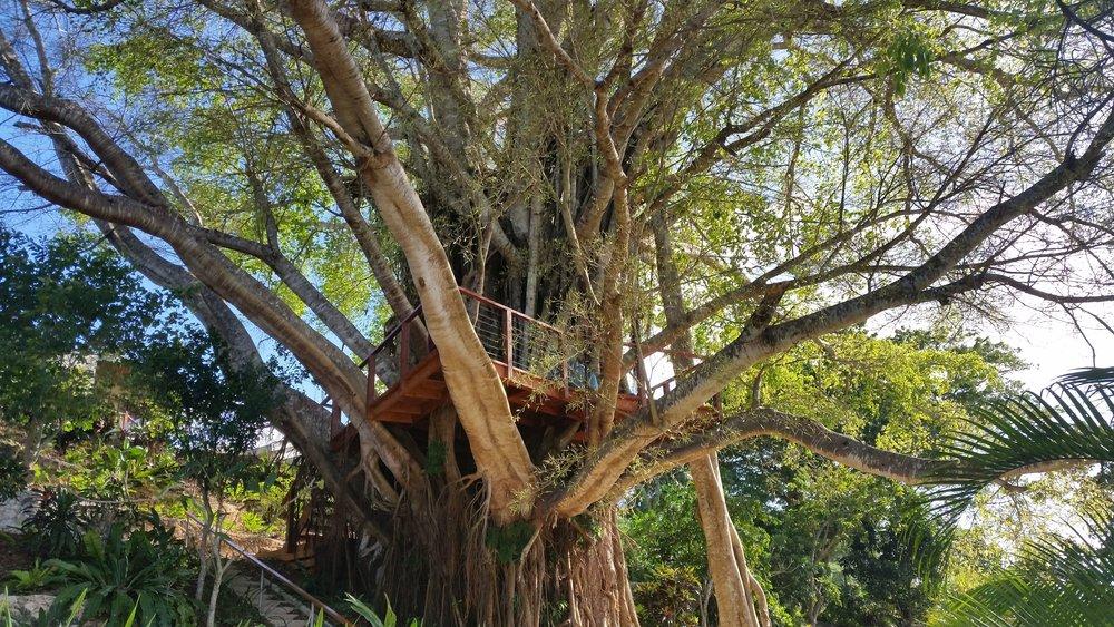 treehouse at poppys