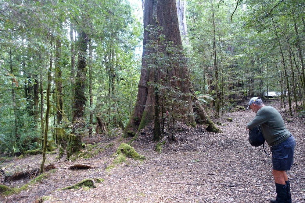 the kazoos track starts to the left of the big tree