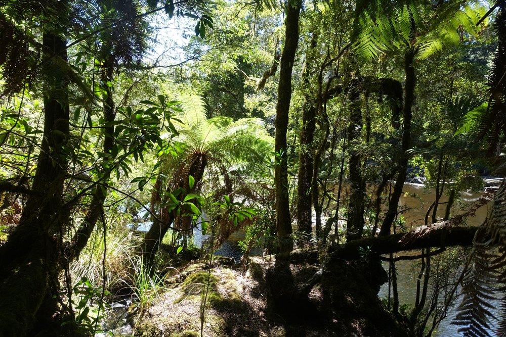 rainforest on the Huskisson river