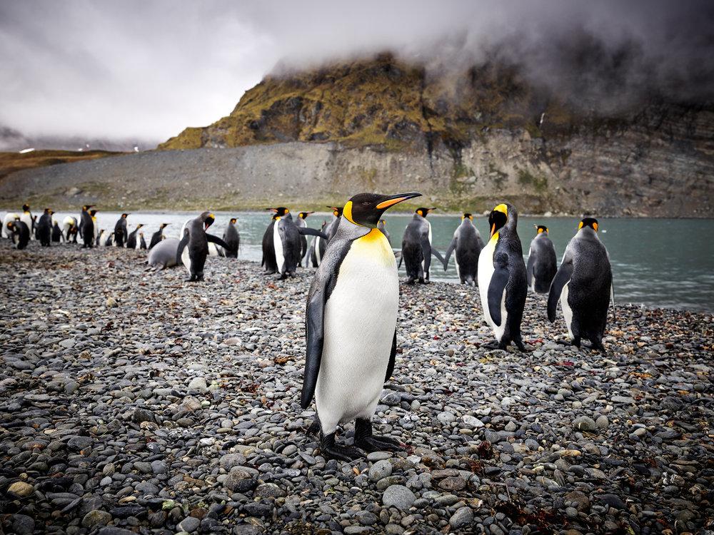 JPEG (8-bit)-16_1108-Antarctica-CF001891.jpg