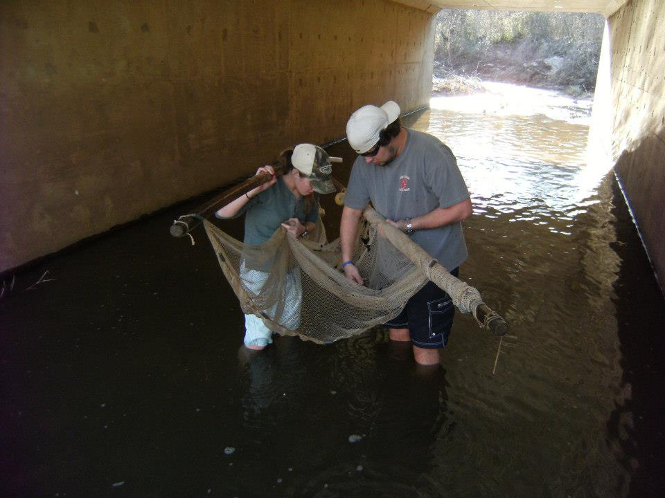 Pulling Creeks for Darters.jpg