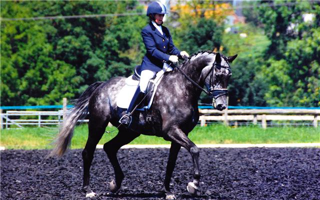 Royal Duchess   Stable Name :Lily  Colour : Grey  Height : 16.2  Sex : Mare  Sire : Royal Diamond  Country of Origin : Britain  Year Foaled : 2005  Level : Elementary  Won the Winter Novice National Championship with her new owners!
