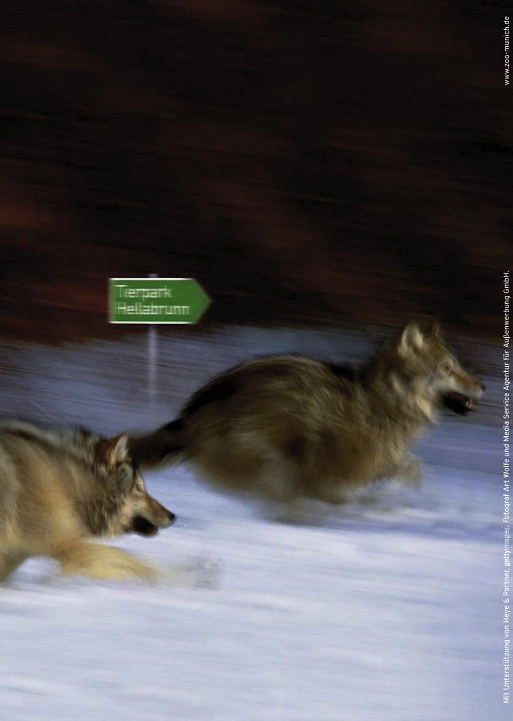 Tierpark Hellabrunn - Plakat Wölfe - Wegweiser
