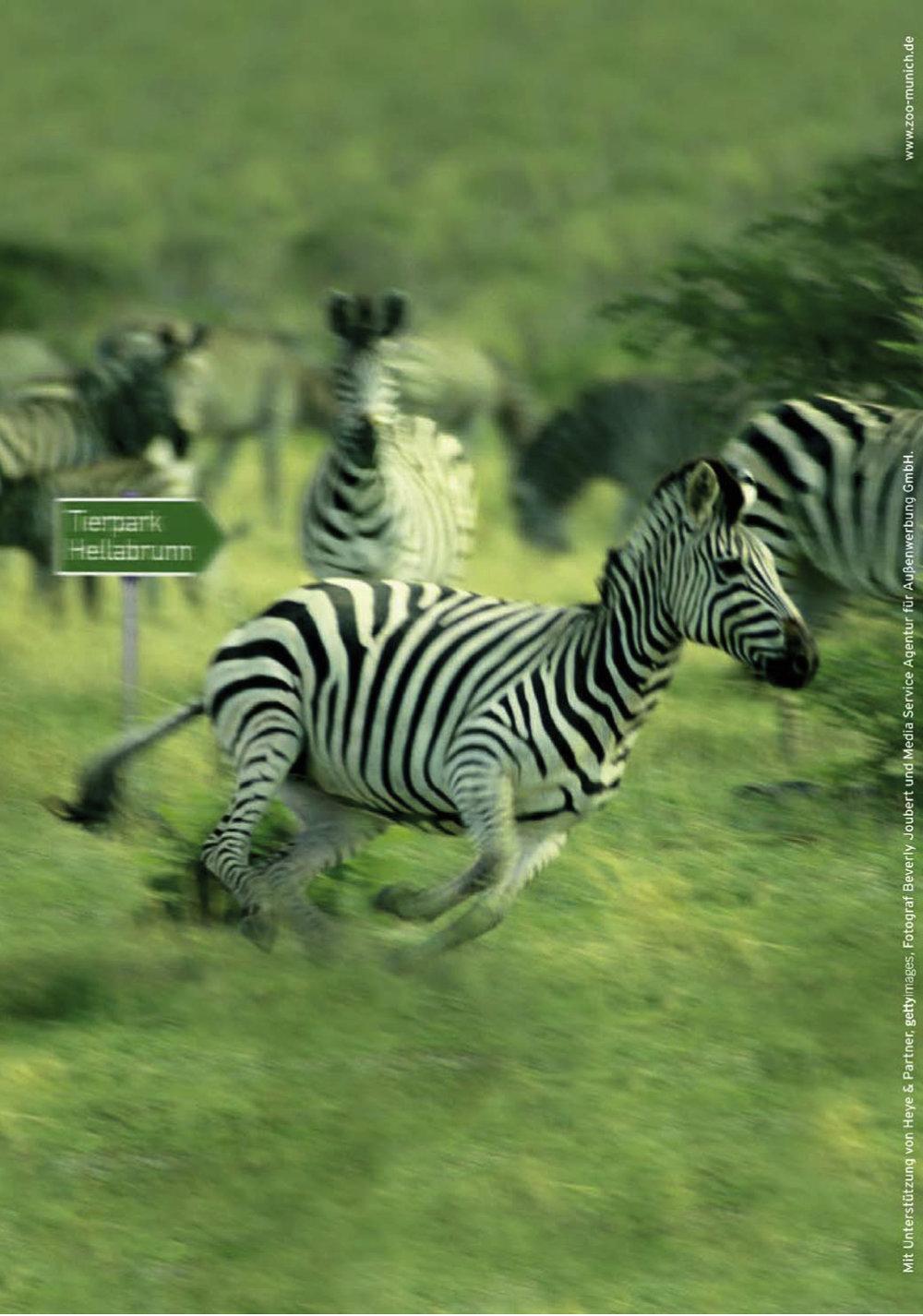 Tierpark Hellabrunn - Plakat Zebra - Wegweiser