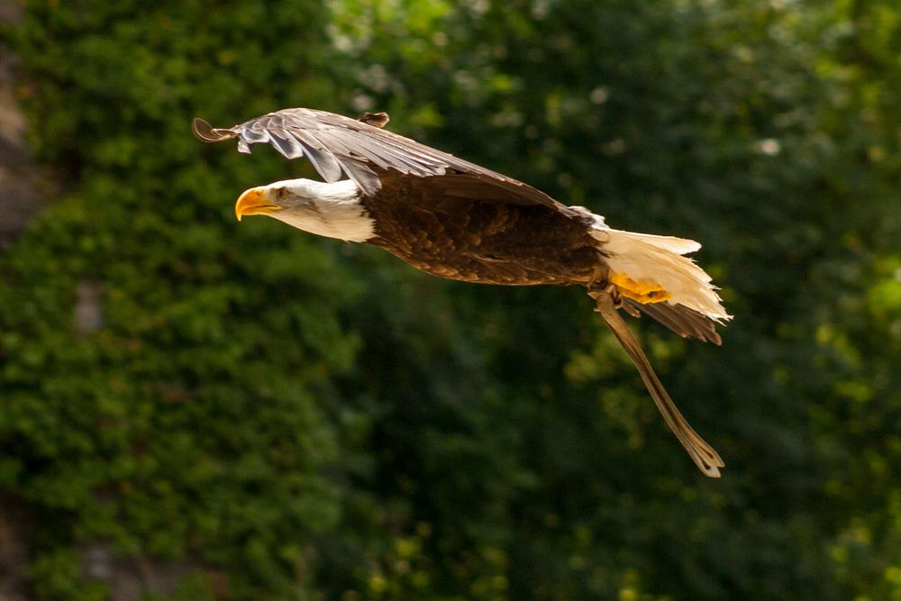 sluitertijd 1/1600 sec (heel kort)    photocredits: ©Wim Wyloeck photography