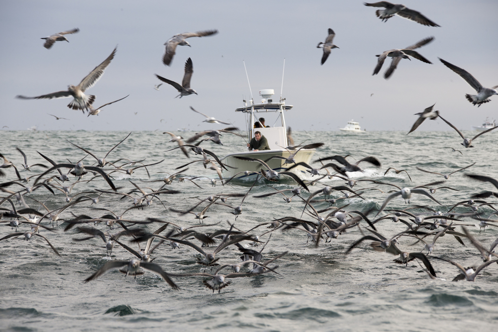 boat gulls.jpg