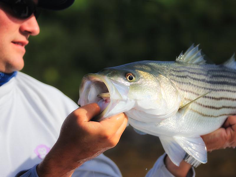 fish show maine.jpg