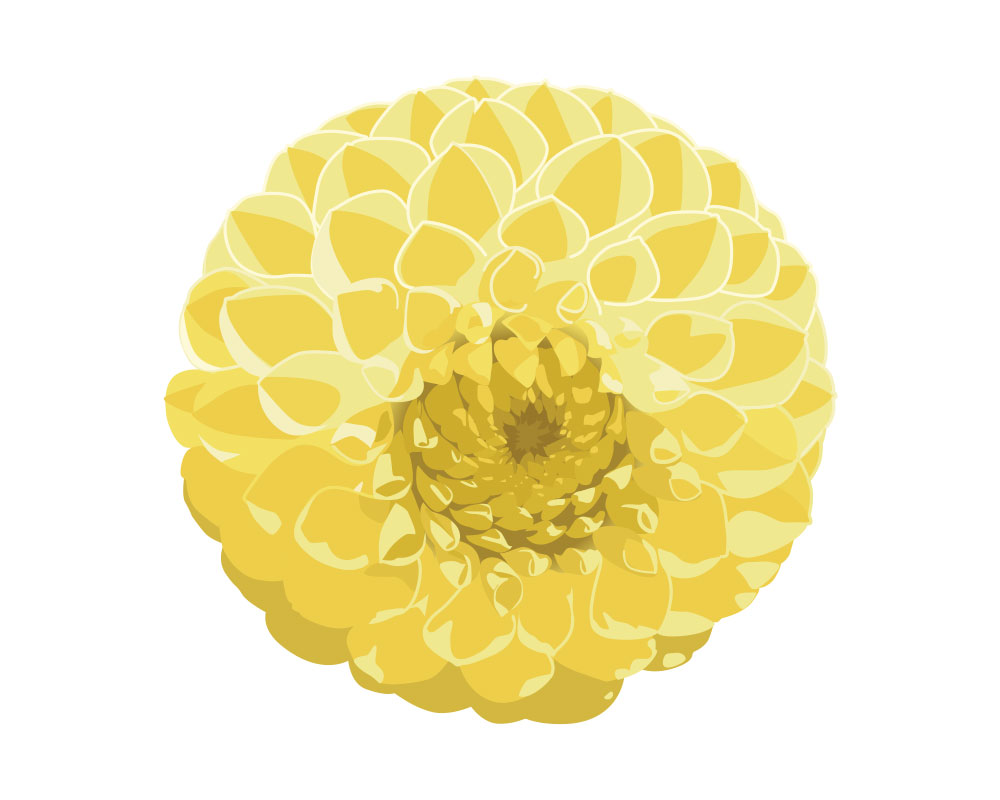 Emblem_dahlia_illustration.jpg