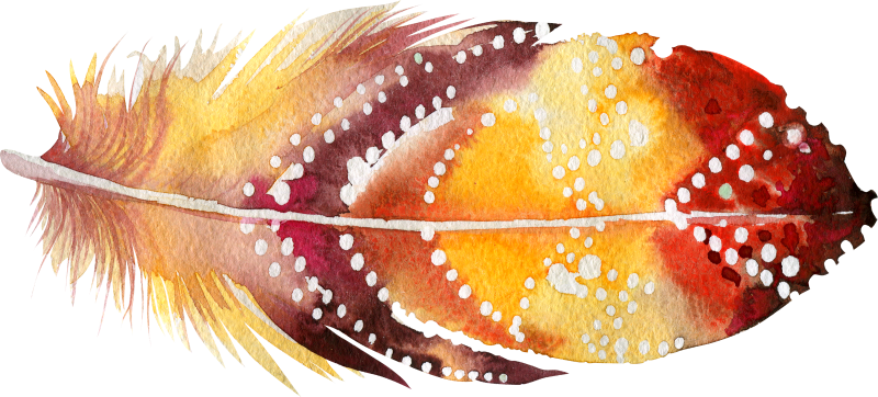 17 feather_800x362.png