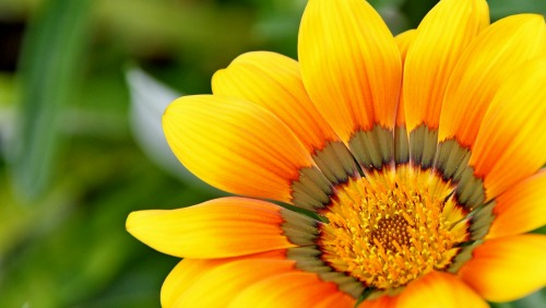 Yellow Flower_500x282.jpg
