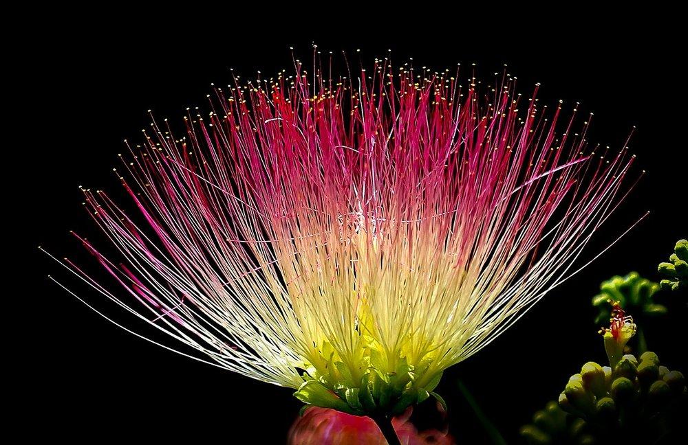 Exotic Flower_1280.jpg