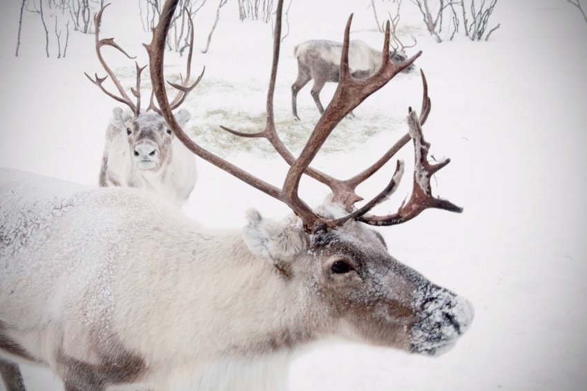 Remembering the Deer Mother of Winter Solstice