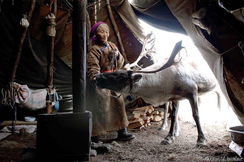 Mongolian Reindeer People.jpg