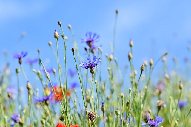 Summer Wildflowers_640.jpg
