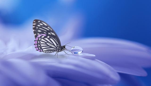 Butterfly on Purple Flower_640.jpg