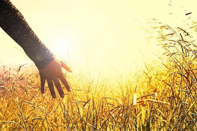 Hand in Sunny Wheat Field_640.jpg
